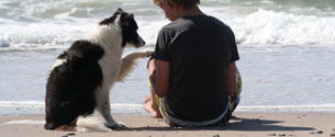 Dog Friendly Motels In Lincoln City Oregon